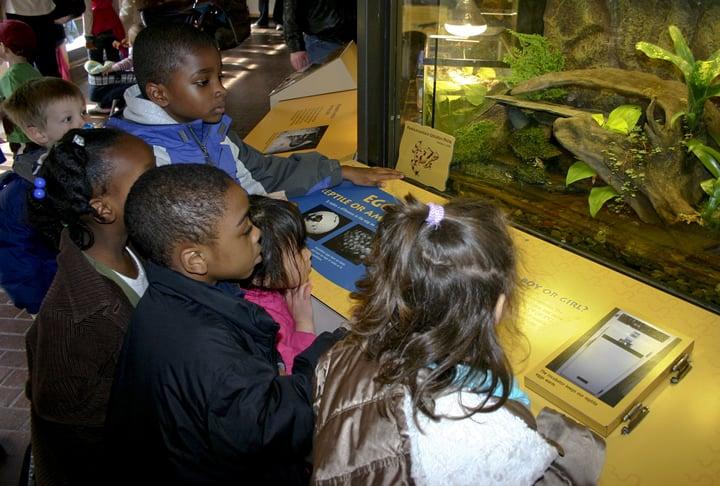 Grupo de crianças negras visualizando aquário em museu de Biologia