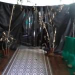 A saída de Moria e a entrada da floresta dourada de Lothlórien