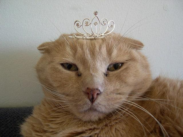 Gato da cor bege, focado de frente, com semblante triste e coroa na cabeça